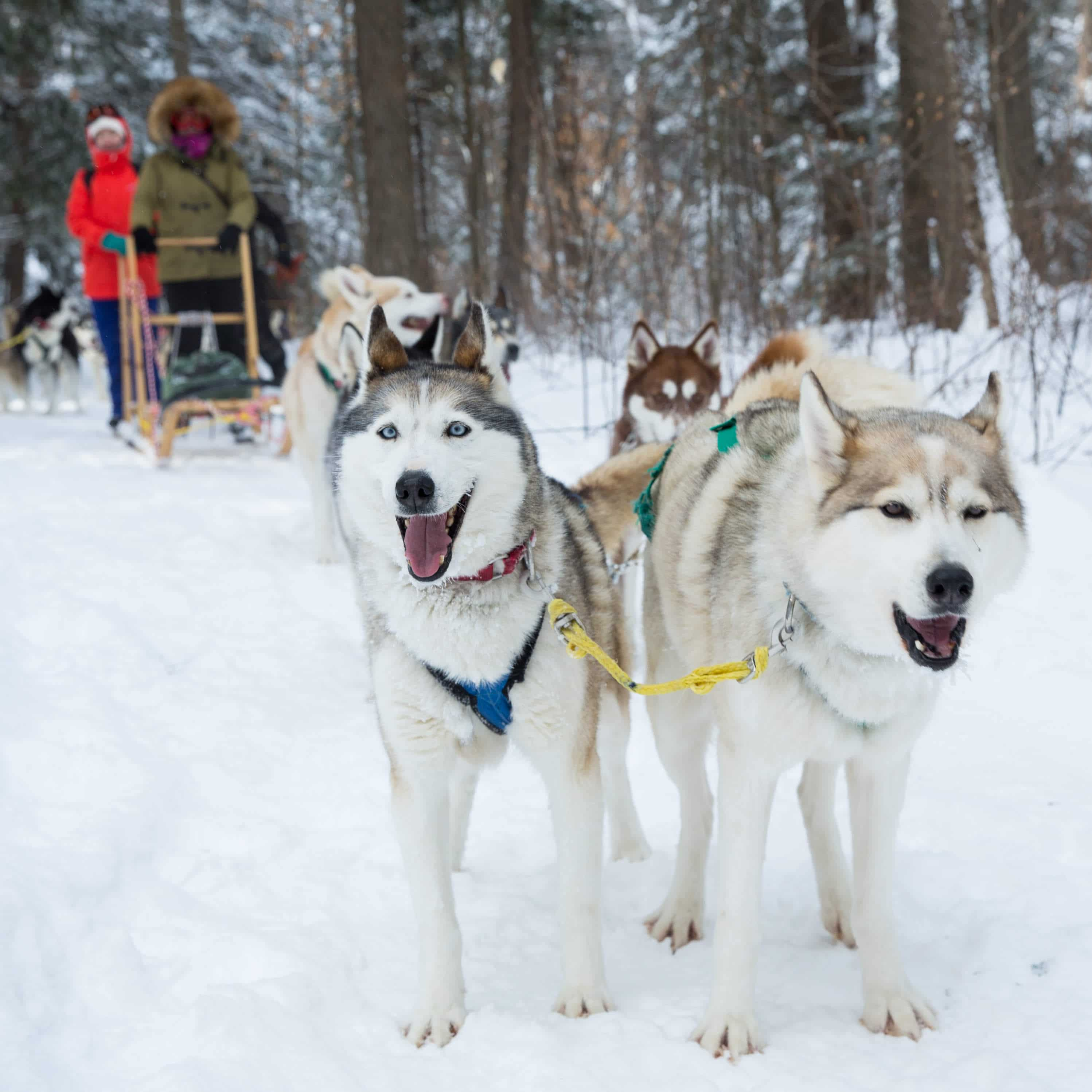 Dog Sledding tours are booked via contact form and by phone.