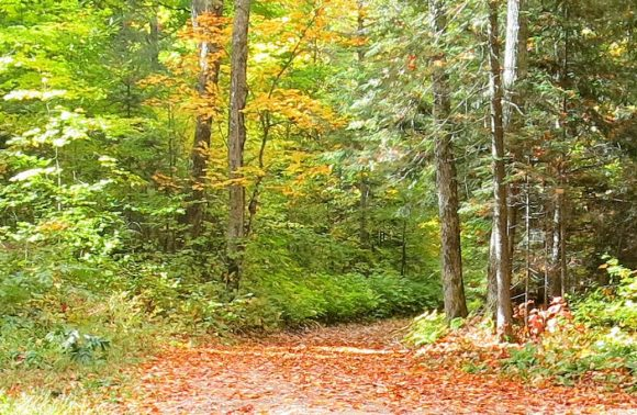 Hiking and Running Trails