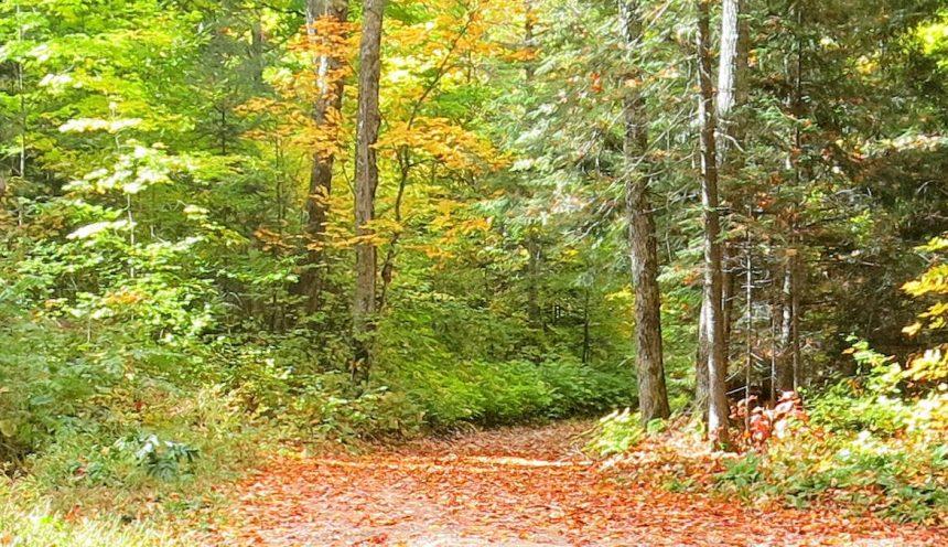 Haliburton Forest Hiking Trails 2