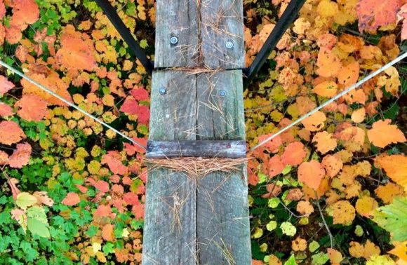 Canopy Tour – Fall