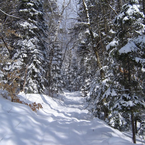 Snowmobile and ATV Trails