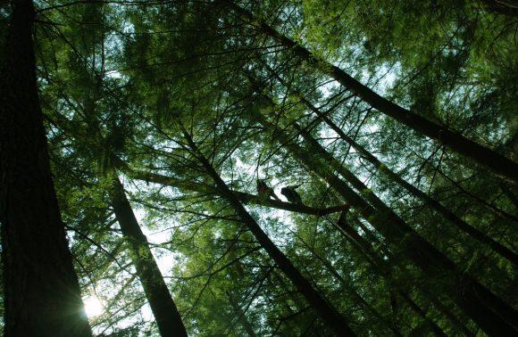 Canopy Tour – Spring