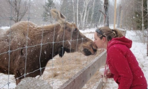A Kiss for Hershe the Moose