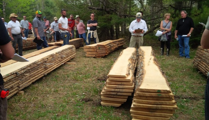 Log Auction, Wood Slabs, Auctioneer