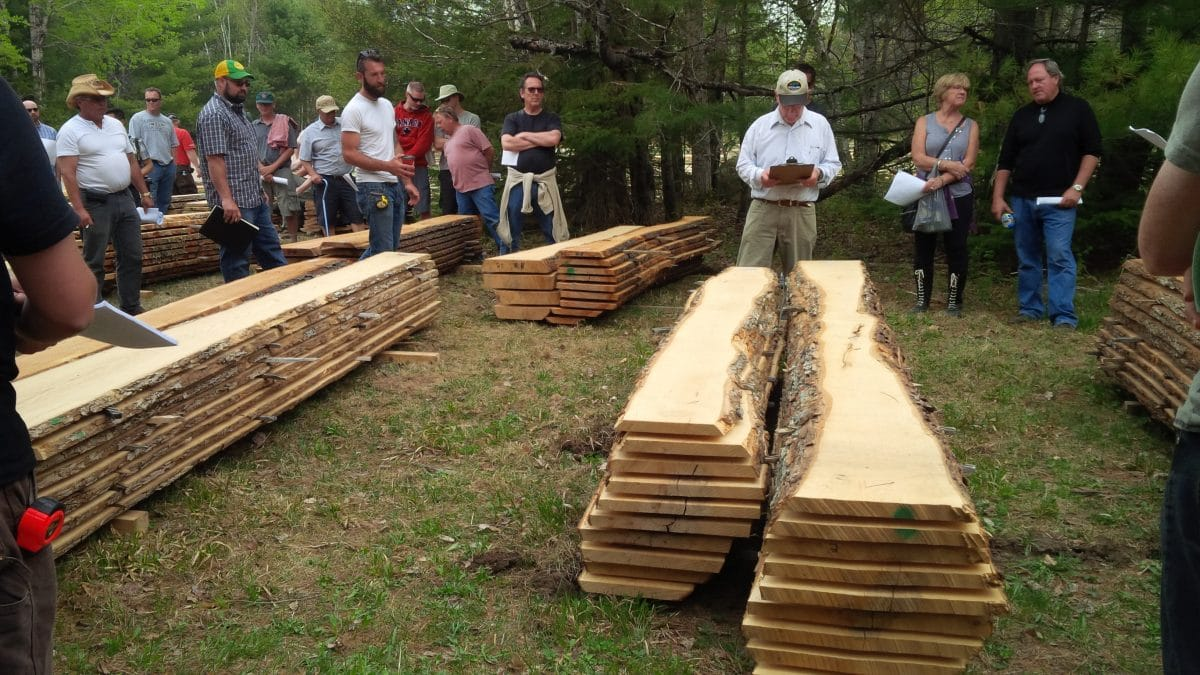 Log Auction, Wood Slabs, Auctioneer