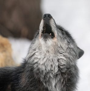 Onyx Howling - Photo courtesy of www.followmenorth.com